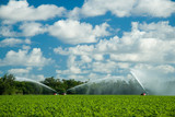 Irrigating crops in field poster