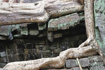 Cambodia; Angkor; Ta Prohm temple