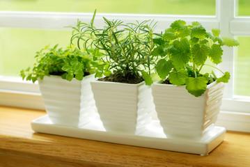 Three Pots of Herbs in a Kitchen Window