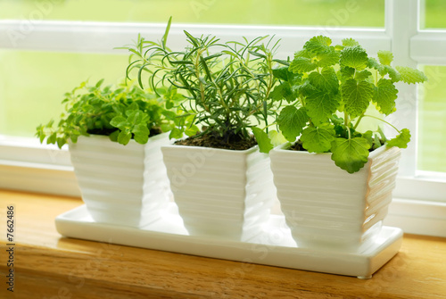 Three Pots of Herbs in a Kitchen Window - 7662486