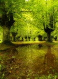 sunbeam in green forest with water reflection poster