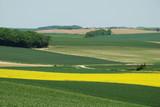 Cultures de colza et de blé,Aisne,Picardie poster