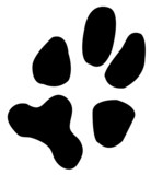 one single paw print from a dog  poster