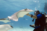 Stingray encounter
