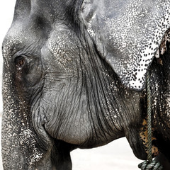 The elephant profile