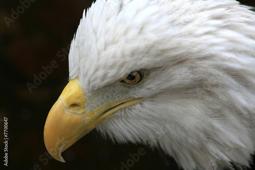 Poster American Eagle 9-11 Remembered
