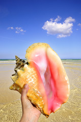 Detail of a hand holding seashell against tropical beach