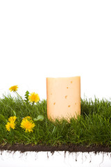 fresh dutch cheese on grass with soil and roots