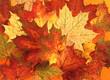 Quadro Herbstlaub