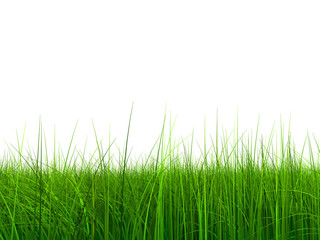 005 (a) grass at 9000 without sky