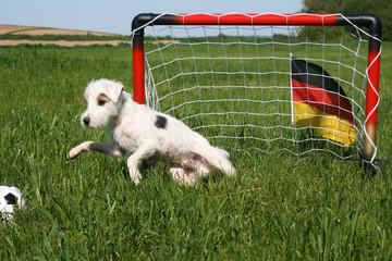 hundefußball