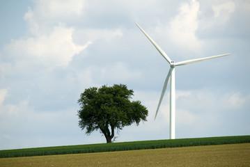 un arbre une éolienne