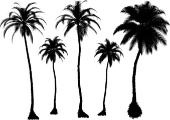 5 vector tropical palms and trees