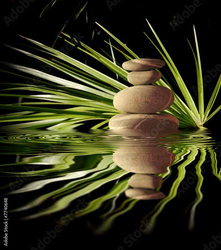 Palmier et galets