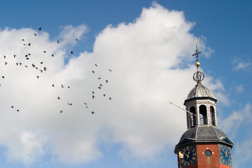 Dutch pigeons around the church