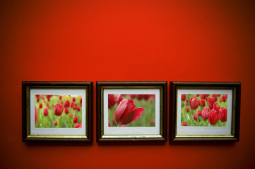 photo frames on red wall