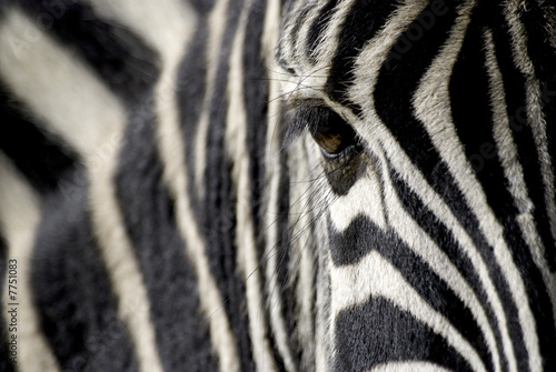Aluminium Zebra zebra eye