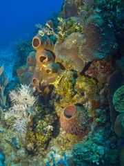 Colorful Sponges on a Cayman Island Reef