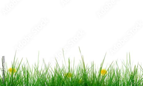 Tuinposter Paardebloem Gras