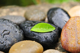 Fototapety Wellness Steine Wassertropfen Blatt