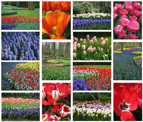 Collection of Dutch flora