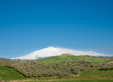 cultivation of tree on the background the volcano Etna poster