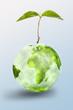 plante nature pousser vivre protéger environnement terre planète