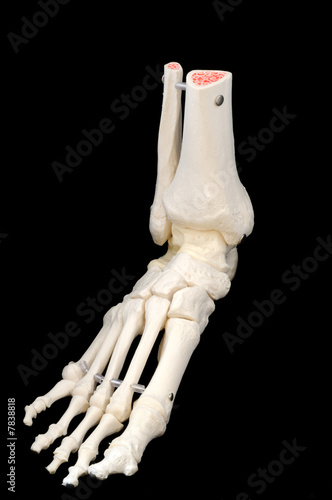 Left side front of foot skeleton