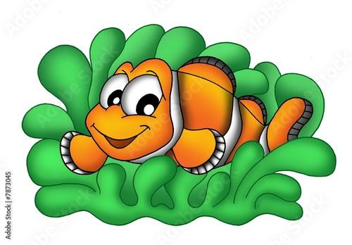 Clownfish v sasanka