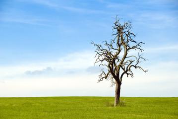 il est mort...l'arbre