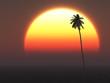 Hot Tropical Sun