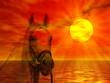 Cavallo nel tramonto