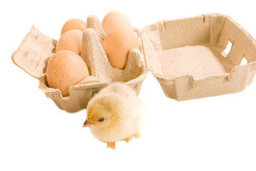 Chick with eggs and box