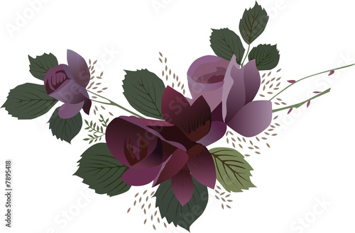 dark red rose illustration