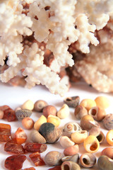 Seaside keepsakes - coral, amber pieces and shells
