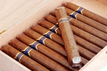 Cigars in a humidor isolated on white background