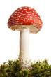 mushroom - 7918451