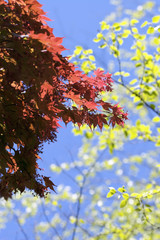 Bright sunny leaves 2