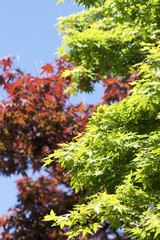 Bright sunny leaves 3