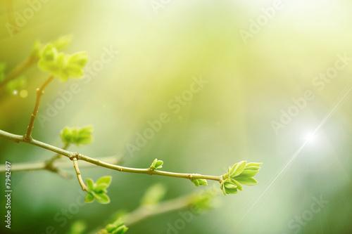Leinwandbild Motiv fairy forest