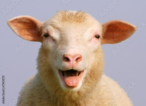 Staande foto Schapen Schaf