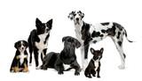 Fototapete Gruppe - Wachsam - Haustiere