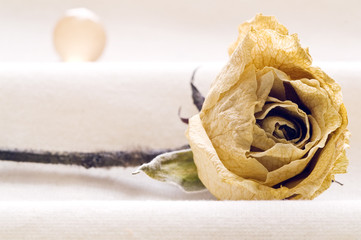 Rosa seca y envejecida