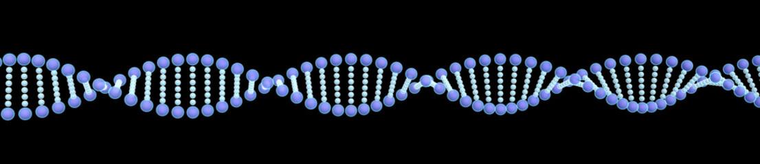 DNA-2