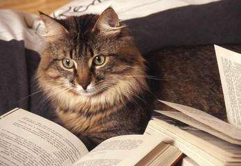 chat  Gouttière lecture