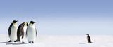 Fototapete Pinguin - Adelaar - Vögel
