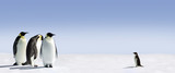 Fototapeta pingwin - zwierzę - Ptak