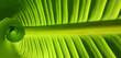 spirale verte