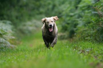 chien sale a la campagne