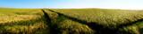panoramic barley field - 7985273